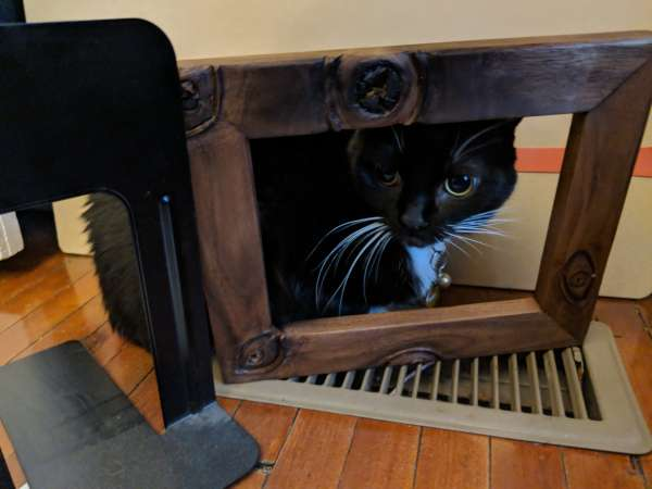 The finished frame on a vent, with a cat for scale